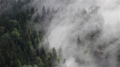 5k Forest Fog Mist 4k 8k Austria