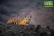 Wild Karnataka (2020) full movie online free 123movies