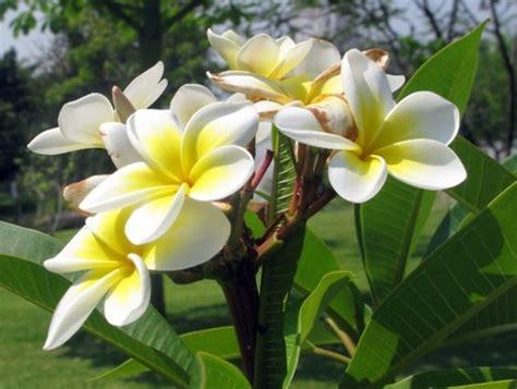flores de mayo en el jardin etnobotanico adriana flickr