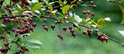 crabapple branches christmas gifts for the gardener the best gift of all 171 oh what a beautiful garden chicagoland