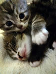 Kitten Sleeping Cute Baby Animals
