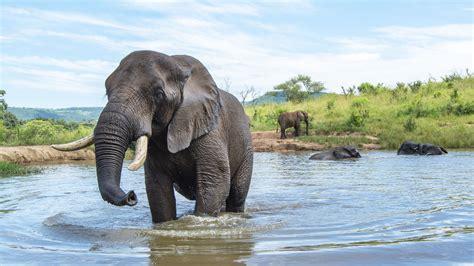 Wild Elephant 5k Wallpaper Hd Wallpapers
