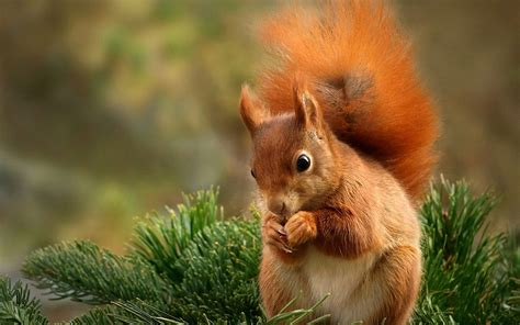Animal Wallpaper Hd For Mobile Free - nature animals 4k squirrels backgrounds apple