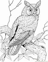 Owl Coloring Pages Printable Pdf Coloringpages101 sketch template