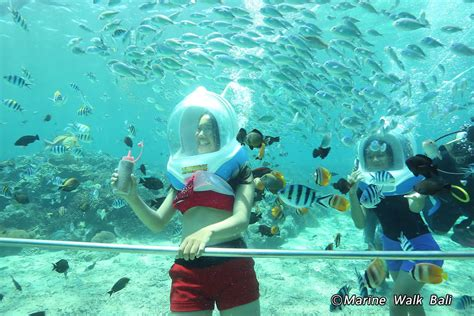 bali marine walk sanur beach activities