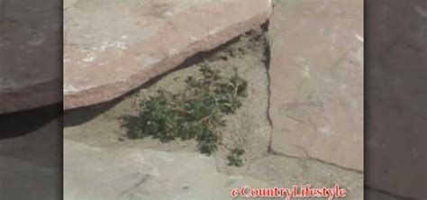 how to install flagstone how to install a flagstone path 171 landscaping wonderhowto