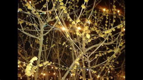 fiore calicanto calicanto fiore d inverno fiori ceiling lights