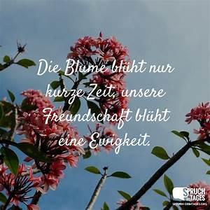 Blume Und Leben : die blume bl ht nur kurze zeit unsere freundschaft bl ht ~ Articles-book.com Haus und Dekorationen