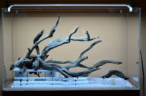 fallen tree branch cm jungle mode  planted tank
