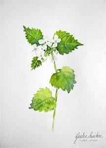 Pflanzen Im Mai : pflanzen und blumenaquarelle im mai geschesanten ~ Buech-reservation.com Haus und Dekorationen