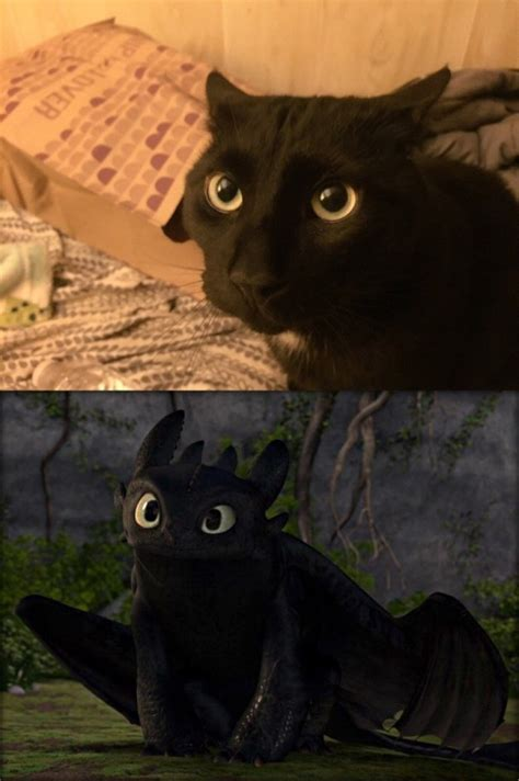 black cats    toothless