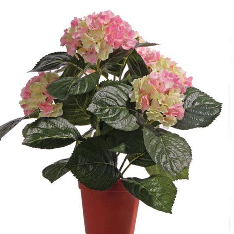 hortensien überwintern im topf k 252 nstliche hortensienpflanze im topf f 252 r einen dauerhaften blumenschmuck