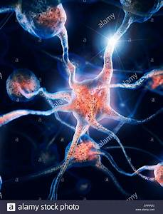 Network Of Neurons And Neural Connections  Brain Cells  Scientific Stock Photo  83501556