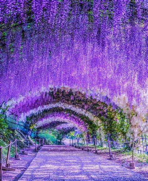 amazing flower tunnel   world