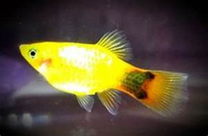 1000+ images about tropical fish on Pinterest | Tropical ...