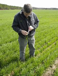 Wheat  U2013 Time Running Out For Herbicides  U00ab Seminole Crop E News