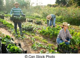 Contains special layers and smart objects for your amazing artworks. Group of gardener workers. Group of multi racial gardener ...