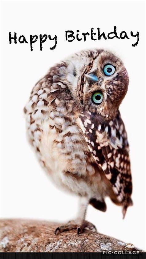Happy Birthday Owl Images Best 25 Happy Birthday Images Ideas On