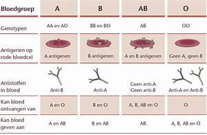 Bloedgroep b