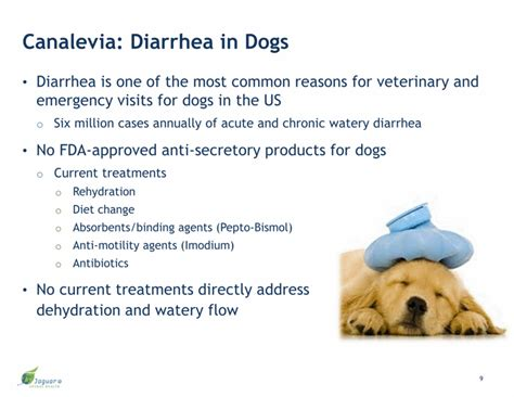 diarrhea in dogs types of diarrhea in dogs pictures to pin on pinterest pinsdaddy