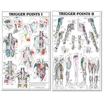 trigger points   ii laminated chartposters amazoncom industrial scientific