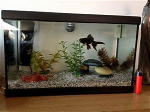 Black moor advice - Aquarium Advice - Aquarium Forum Community