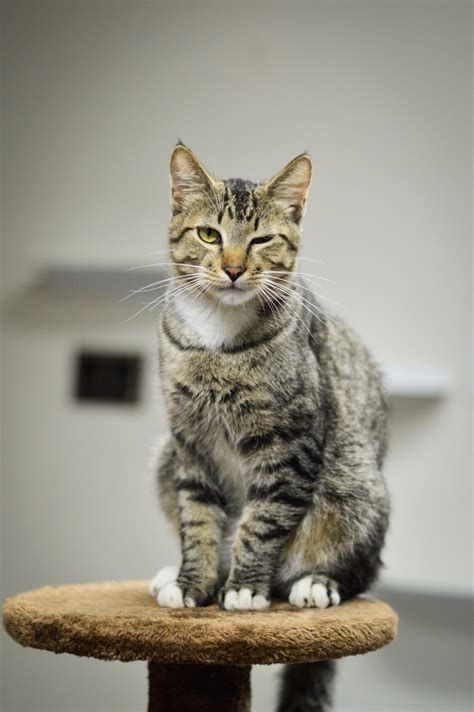 The Cat House by Introducing A New Cat To Your Cat Oktibbeha County