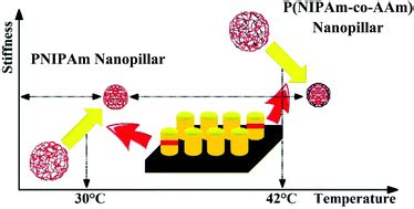 thermally induced softening  pnipam based nanopillar
