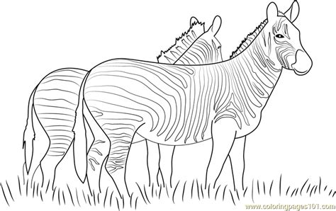 zebras walking  coloring page  zebra coloring pages coloringpagescom