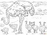 Ostrich Coloring Chicks Pages Printable Baby Colouring Supercoloring Horse Drawing Ostriches Animals Main Drawings Template Paper Designlooter Templates Sketch Adult sketch template