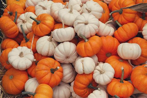 Desktop Fall Backgrounds Pumpkins by Fall Wallpaper With Pumpkins 52 Images
