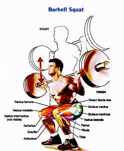 Squat  Techniek Uitleg  6 Tips  8 Fouten En Trainingsschema