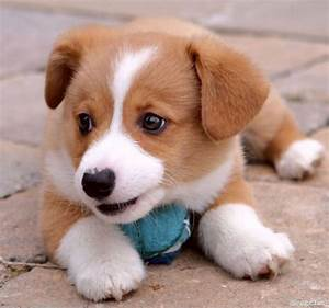 Crazy Animal Pictures: cute little puppies