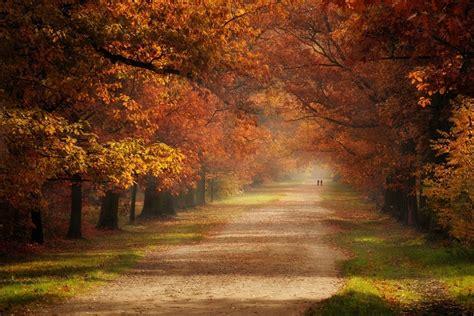 Orange Fall Wallpaper by Fall Grass Road Trees Mist Green Orange Leaves