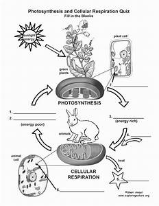 50 Photosynthesis Diagrams Worksheet Answers  2020