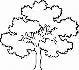 Coloring Tree Rainforest Oak Drawing Awesome Line Trees Pecan Mahogany Template Drawings Sketch Colorir Para Arvores Getdrawings Designlooter Luna 82kb sketch template