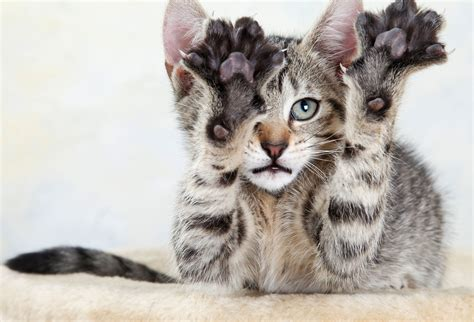 New Documentary Condemns Declawing Of Cats; Who Is Right?