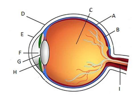 Eye Diagram For Quiz by Eye Ear Safety