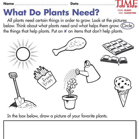 kindergarten plant unit worksheets earth day printables time for pin 4 school work