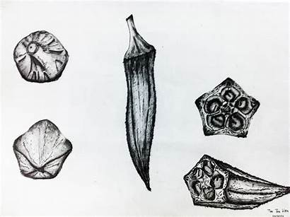 Pencil Sketching Vegetable Sketch Sketches Drawing Reference