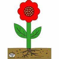 Aufbau Einer Blume : projekt blumen und pflanzen kindergarten und kita ideen ~ Whattoseeinmadrid.com Haus und Dekorationen