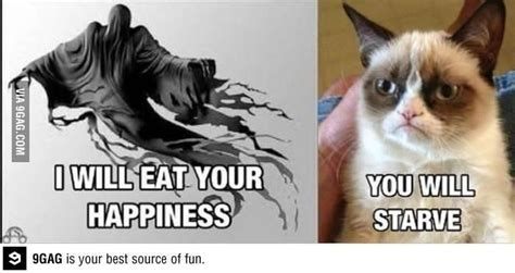 grumpy cat tard  challanged clean humour jokes
