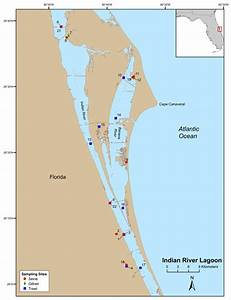 Age, growth, and recruitment patterns of juvenile ladyfish ...