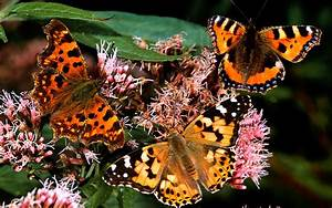 Next Year Could Be Most Exciting For Butterflies For A