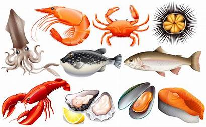 Mer Fruits Seafood Frutti Mare Different Dessin