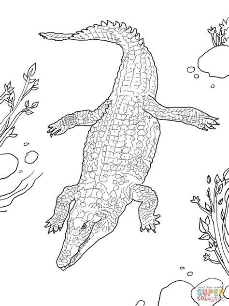 lusso coccodrillo disegno  bambini colorato migliori pagine da colorare gratis  bambini