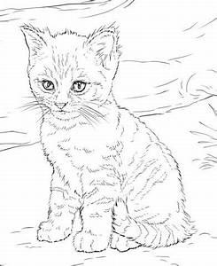 Steine Bemalen Katze : pin von sumpandra auf zeichnen pinterest ausmalbilder katzen mandala bilder und ausmalbilder ~ Watch28wear.com Haus und Dekorationen