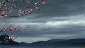 Full HD Wallpaper sakura overcast cloud blurry japan ...