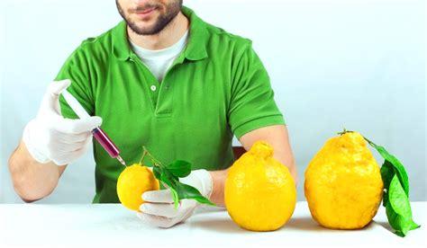 Alimenti Geneticamente Modificati I Prodotti Ogm Un Dibattito Globale