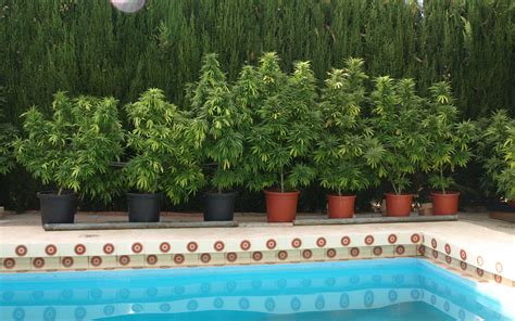 grow  weed  summer high times